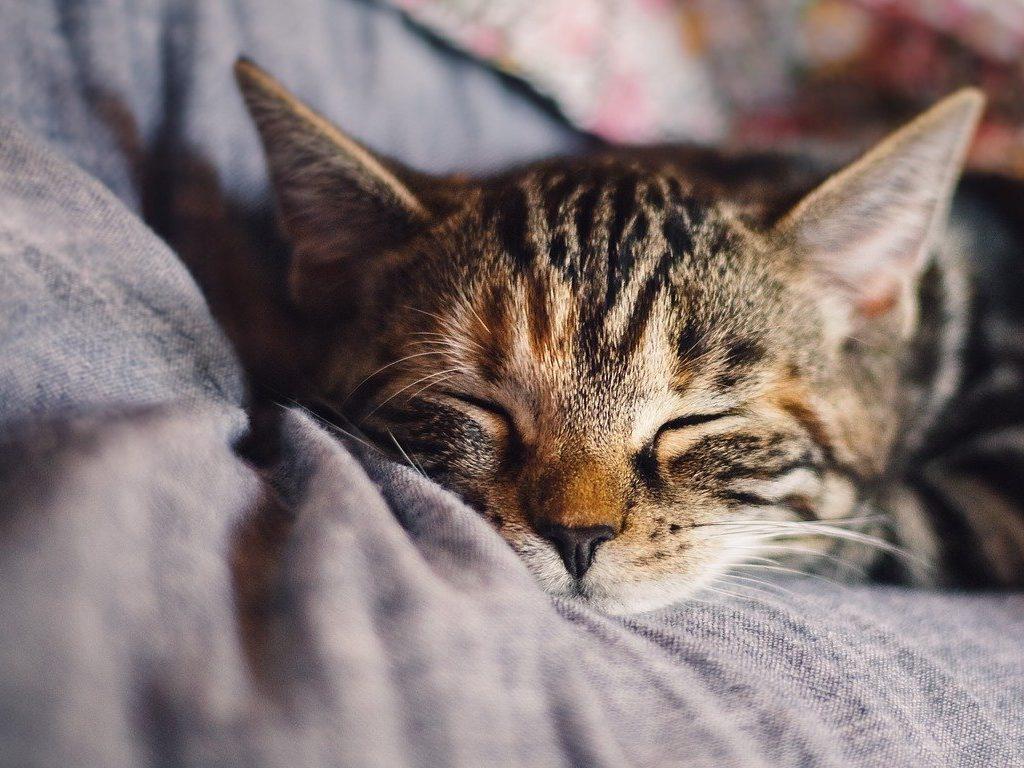 cat, domestic animal, sleep-4189697.jpg